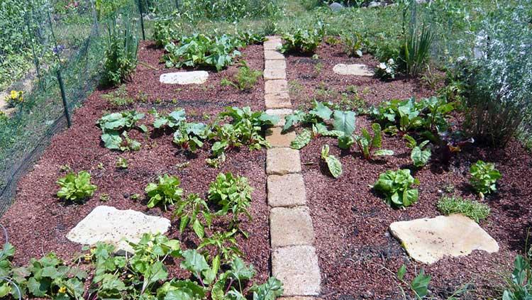 Cocoa mulched garden