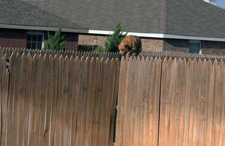 Dog on fence