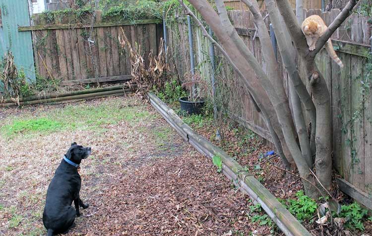 Pet Friendly Garden