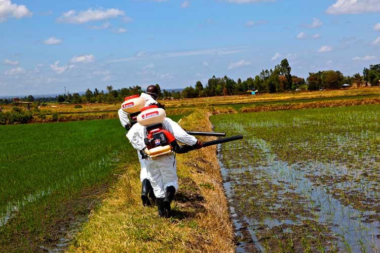 Spraying BTI to kill mosquito larvae