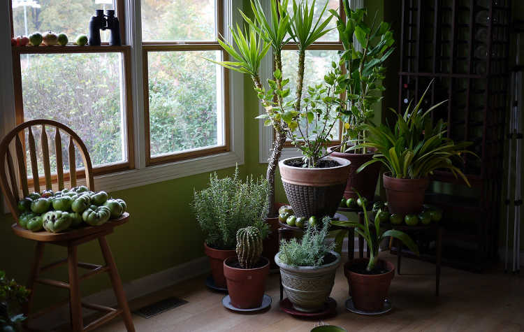 Well spaced houseplants have good airflow