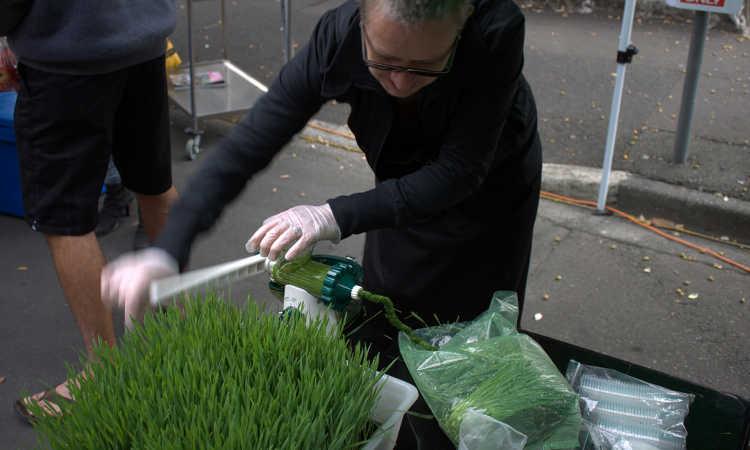 Making wheatgrass juice