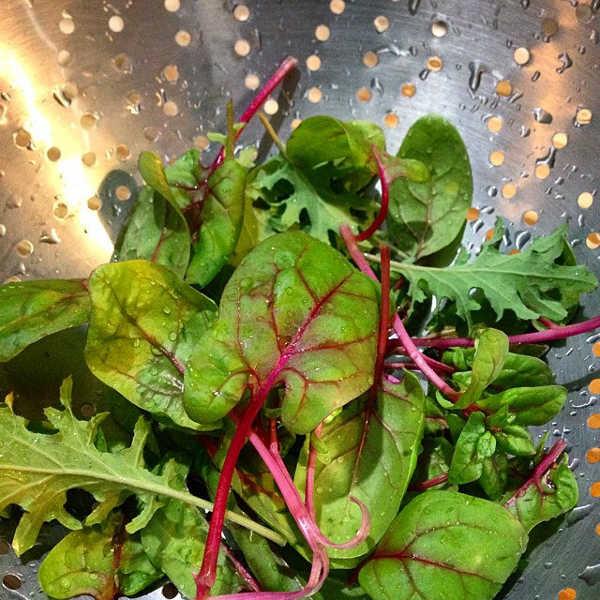 Red Kitten spinach
