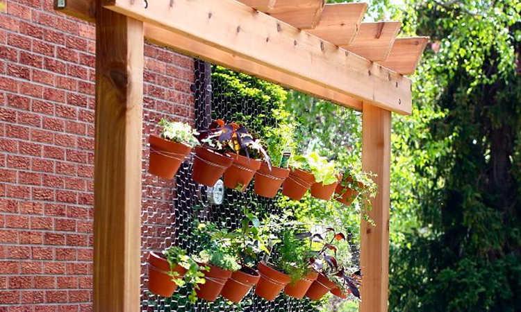 chicken wire plant fence