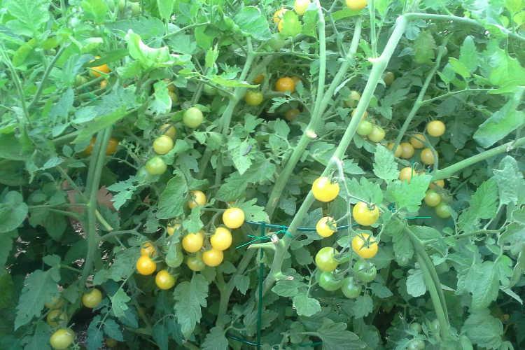 nitrogen and phosphorous rich fertilizer results
