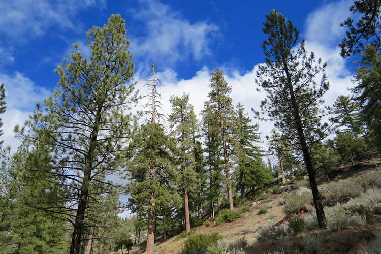 Chilao Campground, Angeles National Forest, February 2018