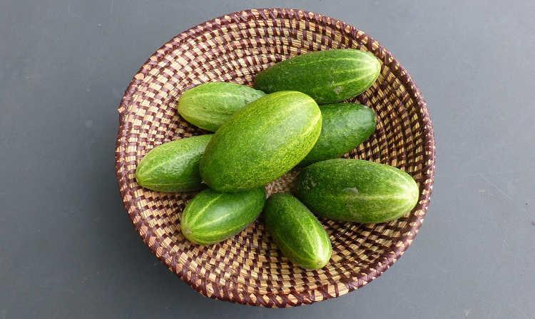 Diamant cucumbers
