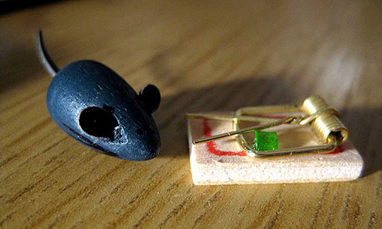 Best mouse trap