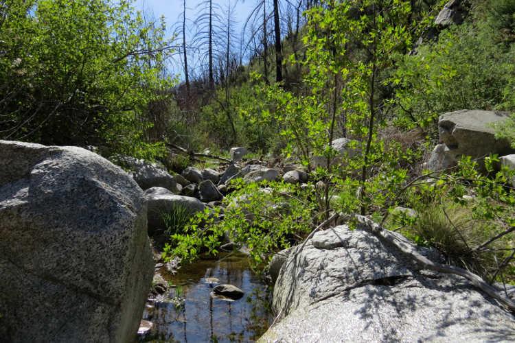 Green growth around a small stream
