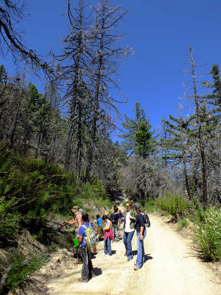 Nature walk in the Angeles National Forest