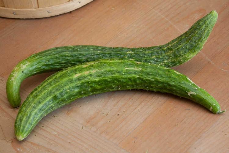 Suyo Long cucumbers