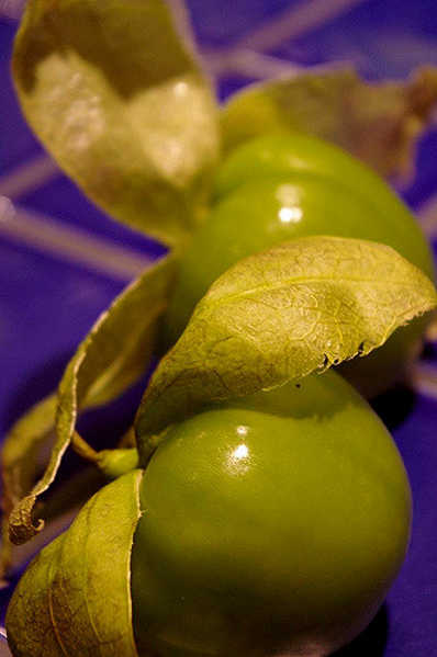 Green tomatillos with husks