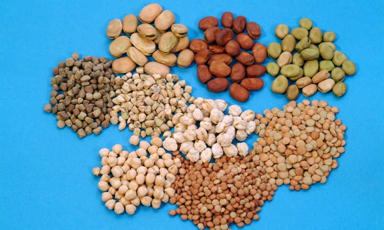 Different kinds of seeds