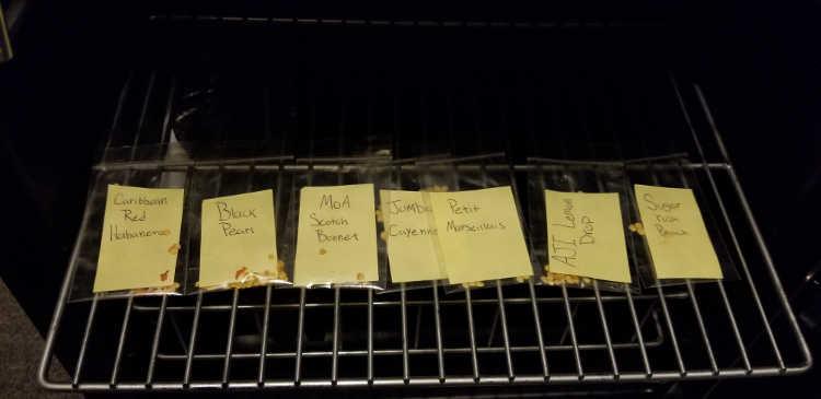 Seeds in plastic bags in NewAir beverage cooler