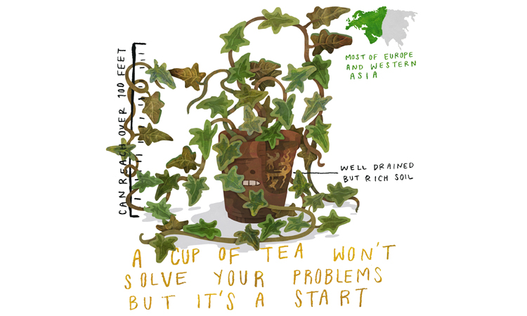 English Ivy Care Guide