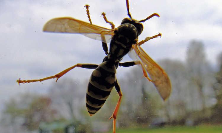Best Wasp Trap