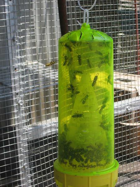 Reusable wasp trap