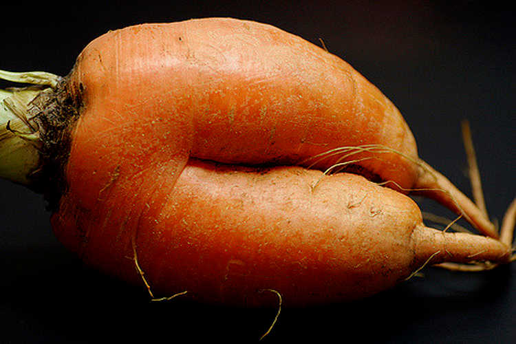 forked carrot