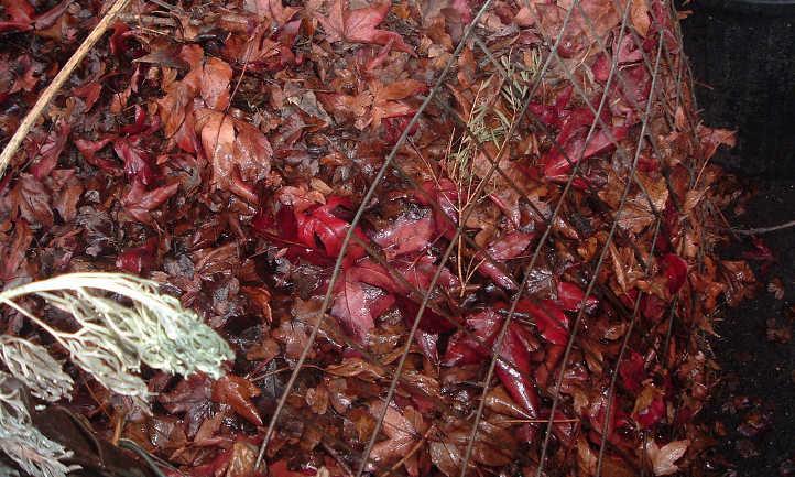 Leaf mulch in wire bin