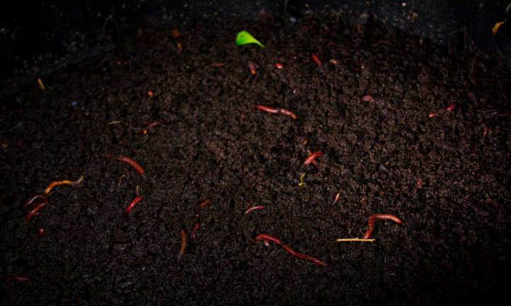 Worms doing their job