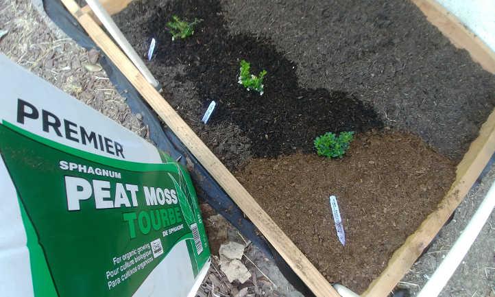 Adding peat moss mulch