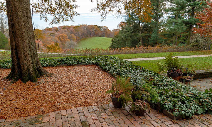 Pachysandra as a border plant
