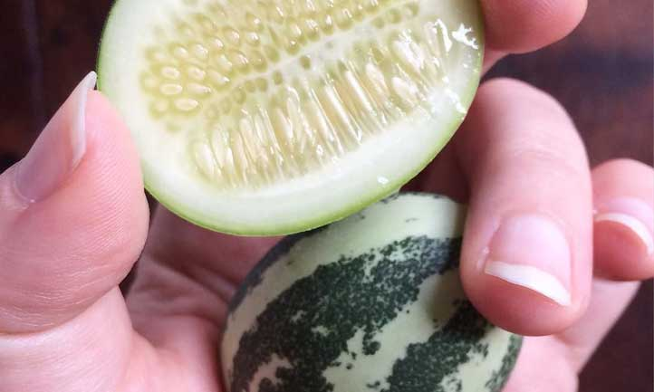 A cross-section of a single Melothria scabra fruit