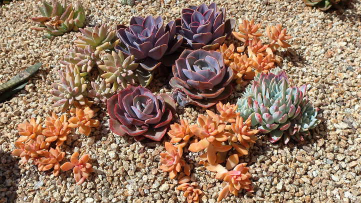 PVN and other succulents