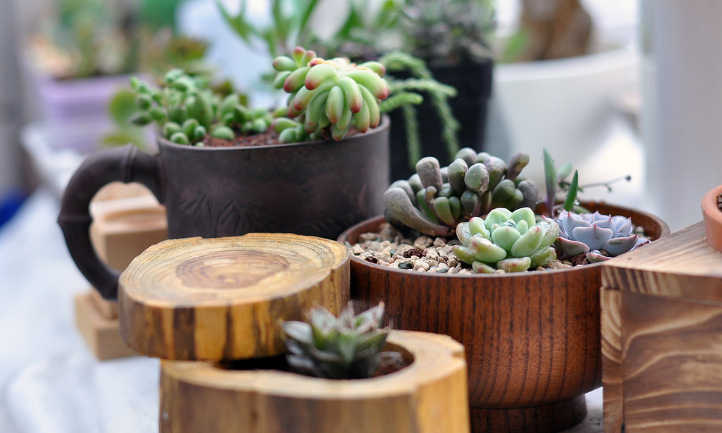 How Often To Water Succulents