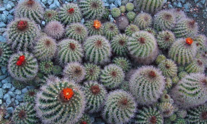 How To Propagate Cactus