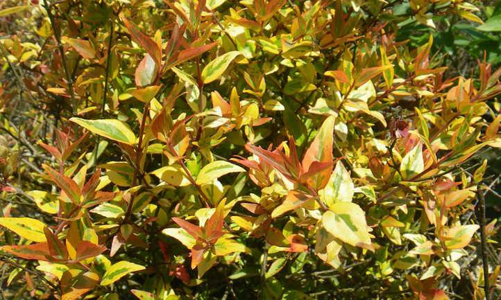 Summer fading into fall foliage