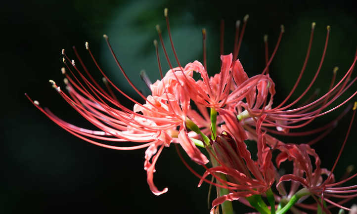 Side view of equinox flower