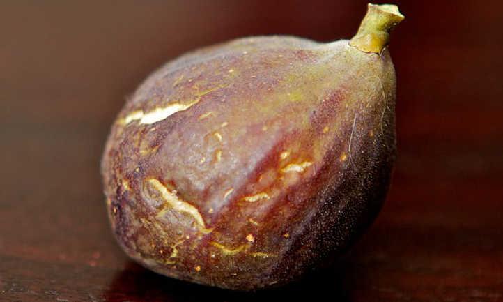Harvested fig
