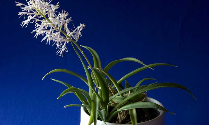 The flower spike on this plant is simply gorgeous.