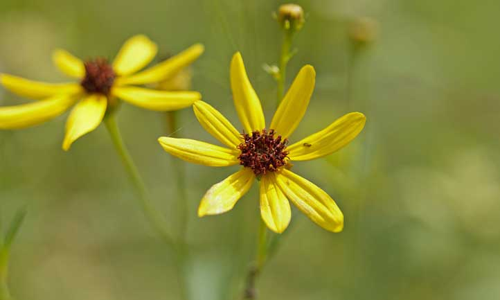 The color yellow makes a prominent appearance on these flowers