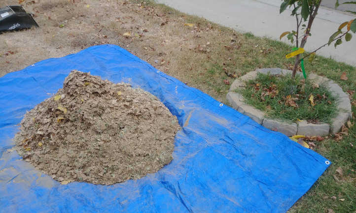 Mulched leaves on a tarp