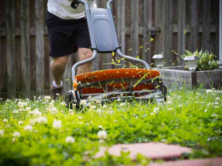 Slicing through blades of grass with a reel mower.
