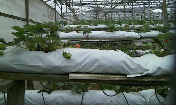 Hydro grow bag system using coir or peat
