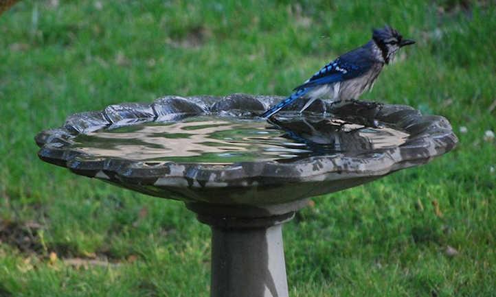 Best bird bath