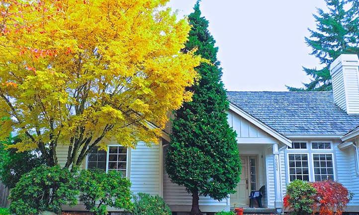 Hinoki cypress and coral bark maple