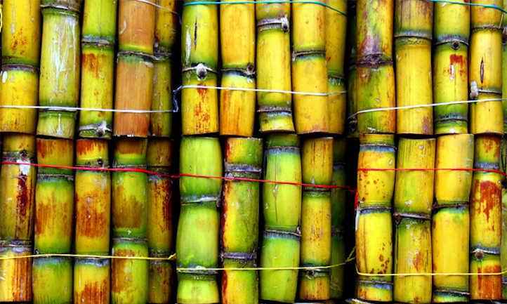 How To Grow Sugar Cane