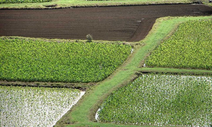 Fields in various stages of growth