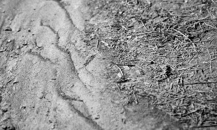 Silty Soil
