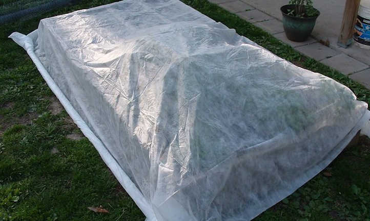 Floating row cover on plants without a frame