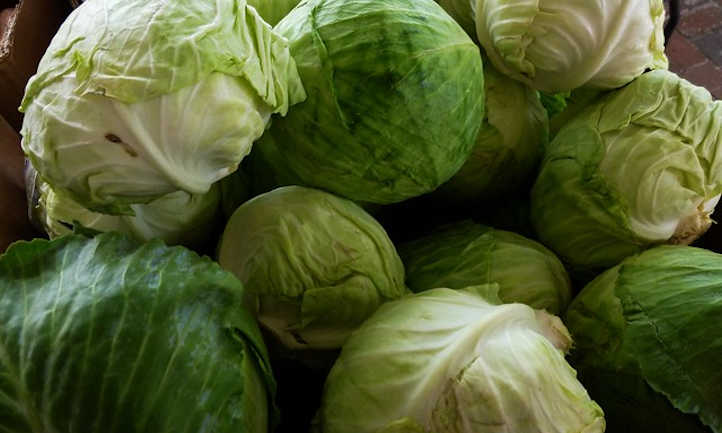 Harvested cabbage heads