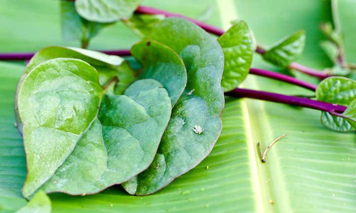 Malabar spinach leaves
