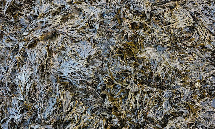 Seaweed drying out