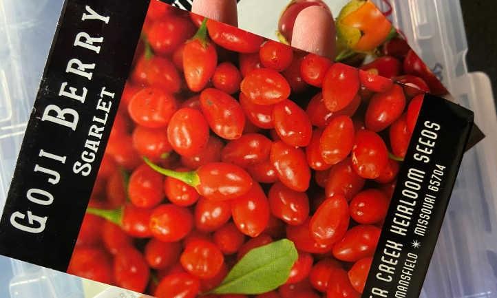 Goji seeds