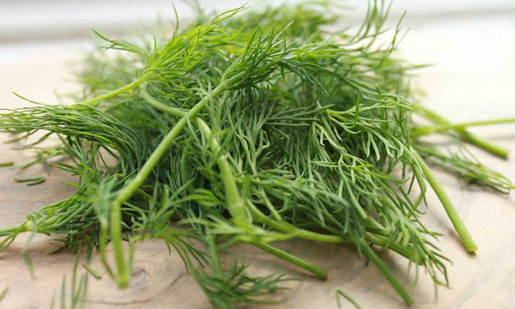 How to harvest dill