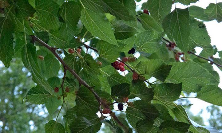 Berries and leaves aplenty